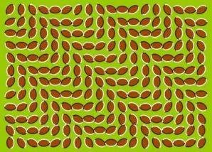 tipuan-mata-21.jpg-w=497&h=358